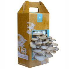 Back to the Roots Mushroom Garden    Grow up to 1½ lbs of gourmet oyster mushrooms in less than two weeks. Simple, safe and straight forward, this DIY kit gets you started with everything you need to procure tasty fungi straight from the box. Spores last for months before opening so this gift can sit on the shelf until you're ready to get started.