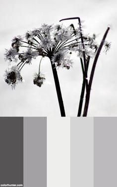 Rime Color Scheme from colorhunter.com