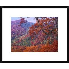 Global Gallery Ridge Range with Autumn Deciduous Forest, Near Buck Creek Gap, North Carolina by Tim Fitzharris Framed Photographic Print Size: