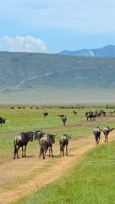 Inside The Ngorongoro Crater...the most beautiful thing I've ever seen