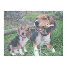 Beagle Mom & Pup Chew Time Fleece Blanket  cute beagle puppies, labrador puppy, puppy parents #dog #like #follow, back to school, aesthetic wallpaper, y2k fashion Beagle Art, Beagle Funny, Beagle Puppies, Cute Beagles, Cute Dogs, Purebred Dogs, Dogs Golden Retriever, Dog Owners, Aesthetic Wallpapers