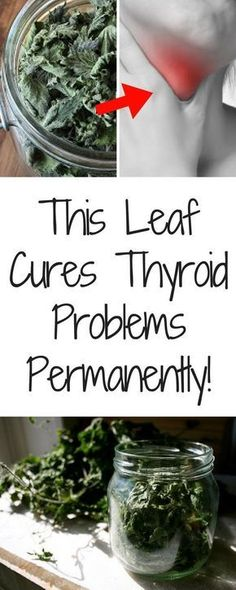 This Leaf Cures Thyroid Problems Permanently! (nettle can correct any type of thyroid imbalance)