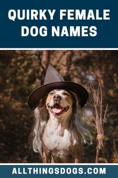 Are you looking for fab-fur-lous names for female dogs? Well, we are here to lend you a helping paw and help you find the best girl dog names for your pupp Unusual Girl Dog Names, Unique Female Dog Names, Girl Dog Names Unique, Cute Girl Dog Names, Funny Dog Names, Cute Names For Dogs, Names Girl, Funny Dogs, Female Dog Names List