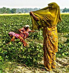 Women in the farms,  Punjab, India