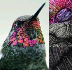 Hummingbird - nature makes the prettiest colours Small Birds, Colorful Birds, Colorful Animals, Exotic Birds, Pretty Birds, Beautiful Birds, Beautiful Things, Hummingbird Pictures, Hummingbird Art