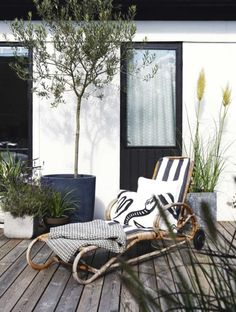 Comfortable rattan lounge chair, patio, wooden deck, olive tree, black.