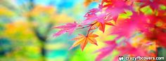 Beautiful Colorful Autumn Leaves Facebook Cover - Facebook Timeline Cover Photo - Fb Cover