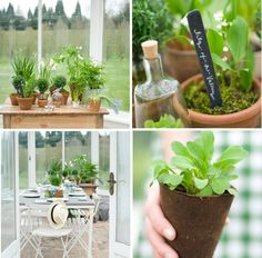 green/plant party favors