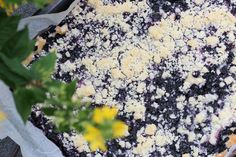 Czech Yeast Blueberry Cake With Crumble Topping - Powered by Low Fat Cake, Types Of Pastry, Cake Varieties, Czech Recipes, Different Cakes, Blueberry Cake, Crumble Topping, Home Baking, Culinary Arts