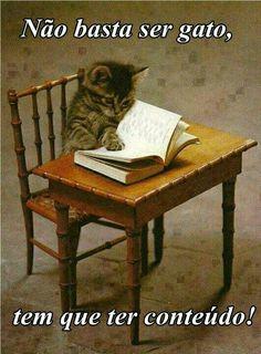 Tendo conteúdo, nem precisa ser tão gato. Com o tempo até o gato vira uma uva passa!!!