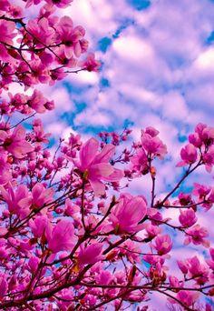 26 Pink Flowers to Create Beautiful Garden Wallpaper Nature Flowers, Flower Background Wallpaper, Beautiful Flowers Wallpapers, Beautiful Rose Flowers, Flower Phone Wallpaper, Beautiful Nature Wallpaper, Flower Backgrounds, Flowers Nature, Amazing Flowers