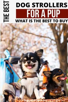 8 Of The Best Dog Strollers to considering buying for your pooch or pooches for traveling or going on a walk. This is a great list for you to consider. Chihuahua Love, Dachshund Love, Best Dog Toys, Best Dogs, Dog Care Tips, Pet Care, Husky Grooming, Dog Accesories, Dog Stroller