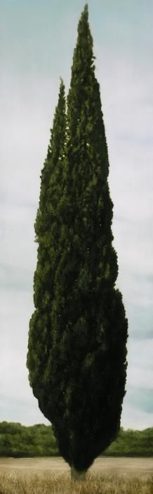 Wonderful Cypress tree by our friend Texan artist @thomasdarnelln who lives not to far from the retreat.