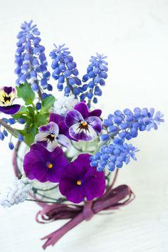 prettylittleflower:    Muscari (by mellow_stuff)