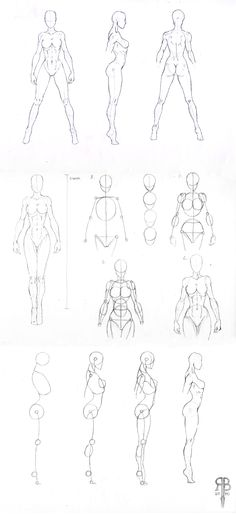 female_body_shapes_by_rofelrolf-d34qro9.jpg (1100×2400)