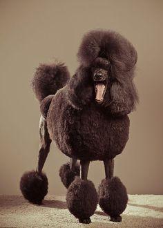 Письмо «Еще Пины для вашей доски «Poodles»» — Pinterest — Яндекс.Почта