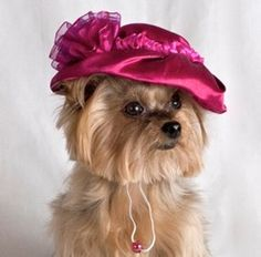 Pretty in Pink Easter Dog Hat