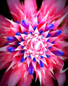 Flower Photography Blooming Bromeliad Pink and by SeeWhatEyeSee, $24.99