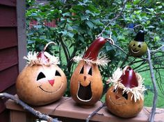 Sawyer gourds