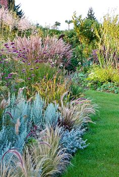 Ornamental grass border where grasses in different sizes are perfectly combined with Artemisia ludoviciana 'Silver Queen', Carex grayi, Helichrysum petiolare, Miscanthus sinensis, Pennisetum setaceum 'Rubrum' and Verbena bonariensis. By Christa Brand Outdoor Plants, Outdoor Gardens, Piscina Diy, Pennisetum Setaceum, Landscape Design, Garden Design, Australian Native Garden, Border Plants, Plantar