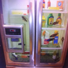 Best idea  Who wouldn't  want a fish tank in your refrigerator ..