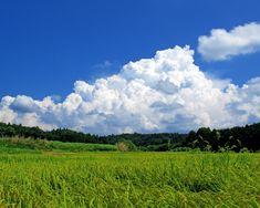 夏の志賀町田園風景1