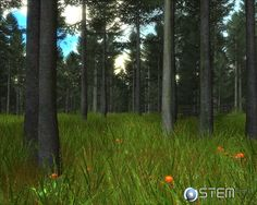 Image result for video game forest