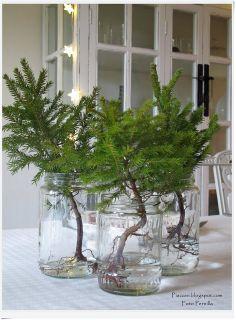 Piazzan: Så otroligt enkelt...dekorera bordet till jul