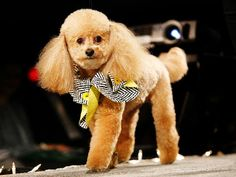 One of the bes groomed dogs I've ever seen!