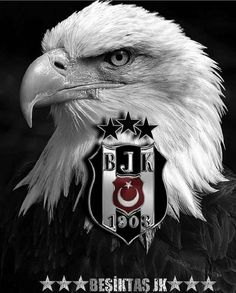 Football Wallpaper, Star Butterfly, Eagles, Bald Eagle, Owl, Birds, Black And White, Animals, Technology