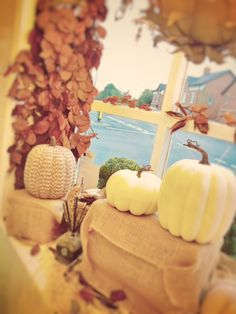 Straight from the USA, our pumpkins add the real American Fall fell to our Styling Lounge