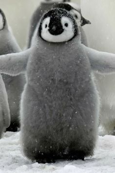 Puffy Penguin.