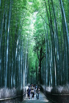Walking on the bamboo road , Arashijama-Sagano.. KYOTO !!!!| Flickr - Photo Sharing!