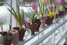 Flower pots filled with yellow and pink flowers in a greenhouse in Stockholm