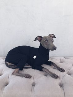 italian greyhound and whippet clothes / iggy jumpsuit / Dog Sweater / dog clothes / ropa para galgo italiano y whippet/ BLACK JUMPSUIT Underwear, Italian Greyhound, Whippet, Black Jumpsuit, Dog Love, This Or That Questions, Pets, Animals, Clothes