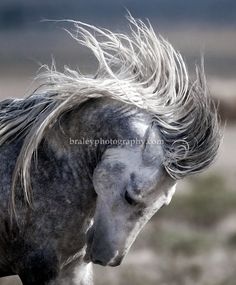 mustang horse. The spirit of the mustang is incredible.