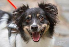 Kapuzensweatshirt Rettungshund Hundesport Hunde Training Maintrailling Agility 1