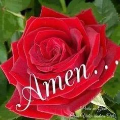 Good Morning Image Quotes, Good Morning Prayer, Morning Prayers, Beautiful Flowers Pictures, Flower Pictures, Praying Emoji, Thank You Images, Daily Prayer, Amen