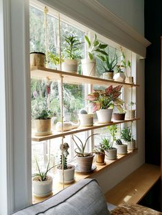 Hanging Plant Shelves – The Artful Roost Hanging Plant Shelves – The Artful Roost Diy Hanging Shelves, Plants On Shelves, Indoor Plant Shelves, Ceiling Hanging, Window Shelf For Plants, Plants On Walls, Hanging Plant Diy, Hanging Plants On Fence, Indoor Plant Decor
