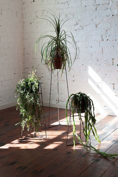 Pot Plant Stands Clear coated steel by Trestle Union Potted Plants, Indoor Plants, Apartment Needs, Casa Real, Welcome To The Jungle, Home Studio, Beautiful Space, Teamwork, Scandinavian Design