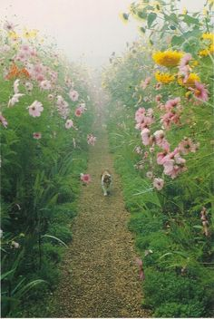 wandelend tussen de bloemen
