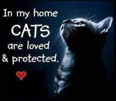 ≧◔◡◔≦ In my home CATS are love & protected. The more I know men, the better I love my cats! I Love Cats, Cute Cats, Funny Cats, Funny Animals, Crazy Cat Lady, Crazy Cats, Beautiful Cats, Animals Beautiful, Kittens Cutest