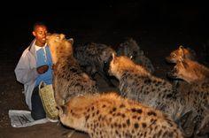 hienas y hombres