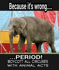 Stop all animals in circuses!