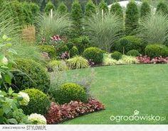 Ogród mały, ale pojemny;) - strona 131 - Forum ogrodnic… na Stylowi.pl