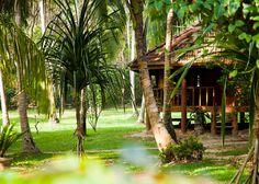 """""""Rutas Verdes. Descubre su esencia"""". Recorre Sri Lanka intensamente, visitando rincones llenos de encanto mágico, cultura, naturaleza, pueblos, villas rurales, mercados locales, monasterios y ruinas. Un viaje que te ofrece el equilibrio perfecto entre relax y aventura."""