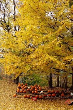 Gourds and gorgeous autumn color!