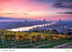 Die besten Aussichtspunkte in Wien Vienna, Vineyard, Outdoor, Dots, Outdoors, Vine Yard, Vineyard Vines, Outdoor Games, Outdoor Life