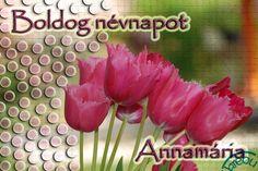 Tulipános képeslap