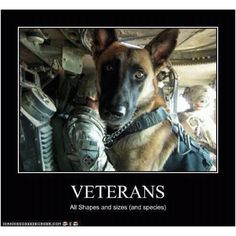 Canine heroes.